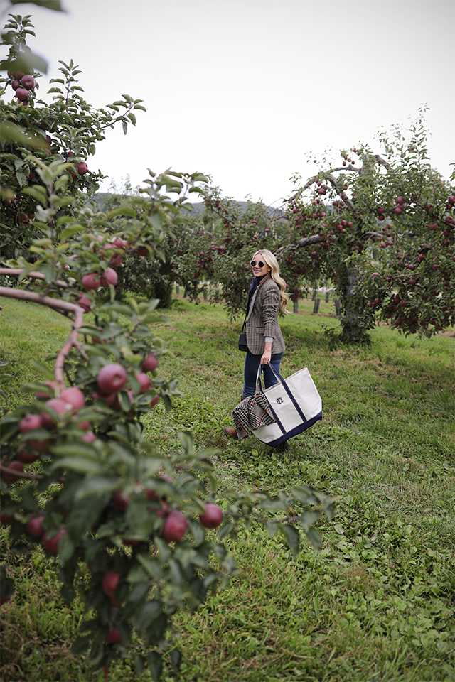 Atlantic Pacific Blog // Blair Eadie apple picking!